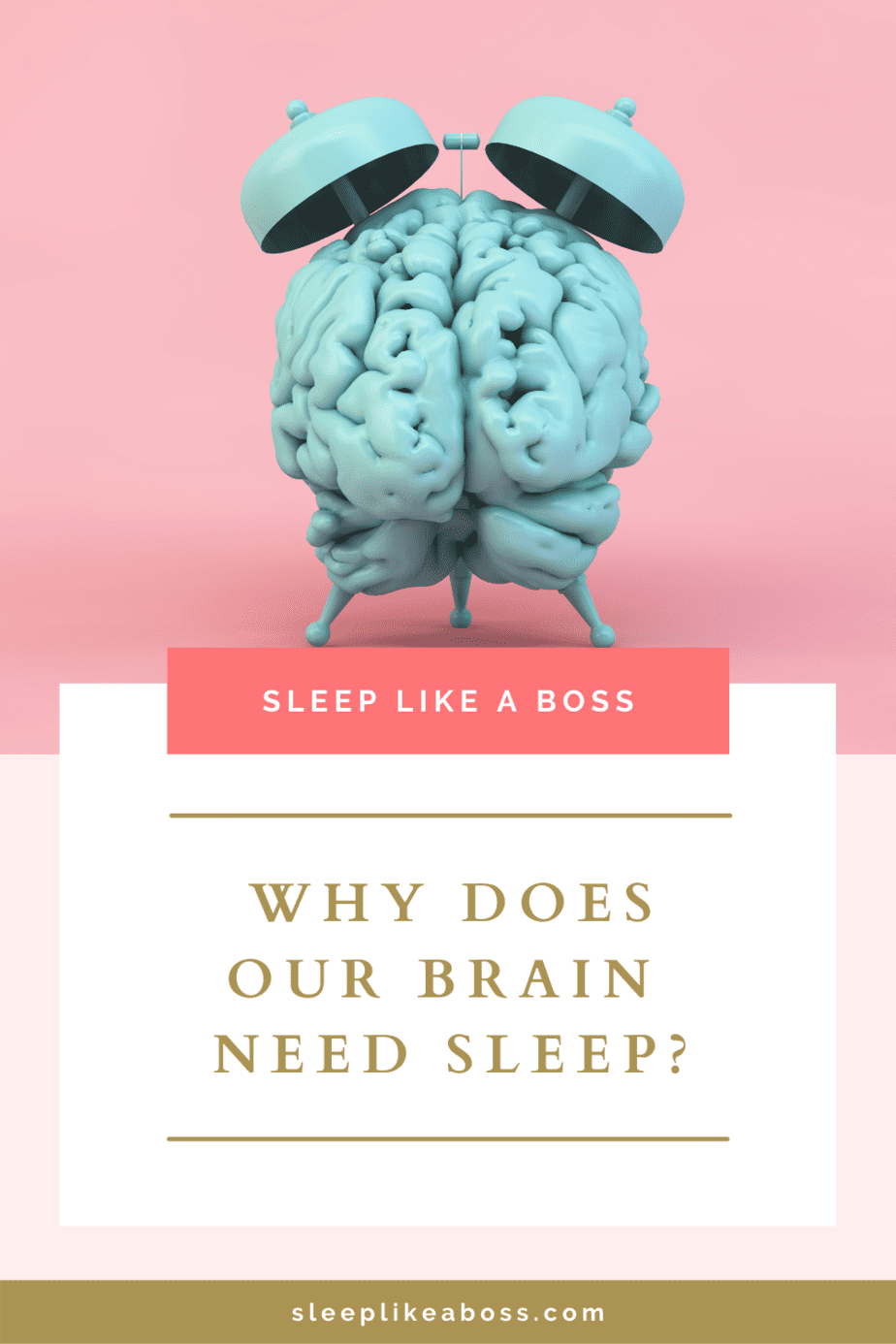 Why does our brain need sleep